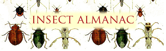 insect almanac