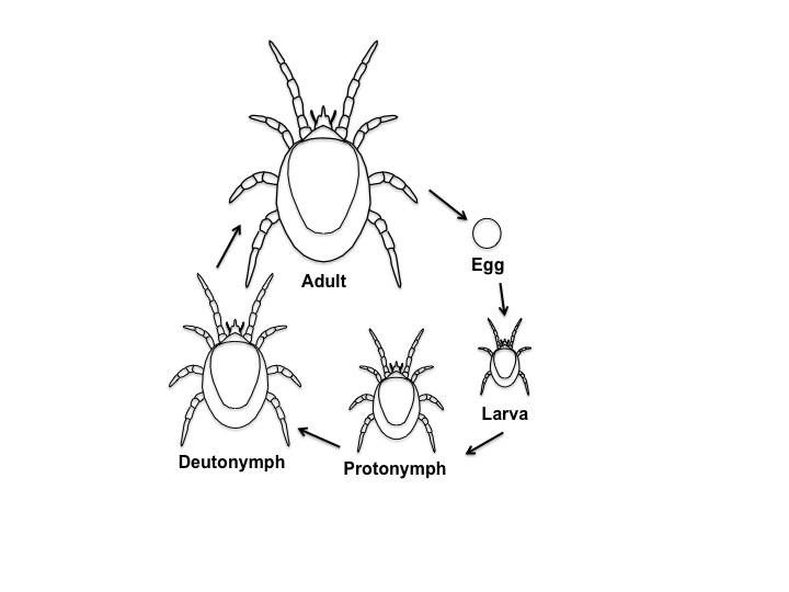 symbiotic mites science literacy and outreach nebraska