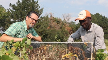 Dr. Jeff Bradshaw (l) and intern Arnold Katende (r) check bug traps in a field.