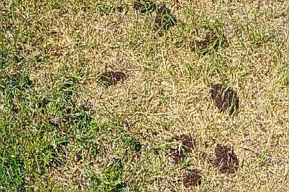 Ant Photo Mound Mounds
